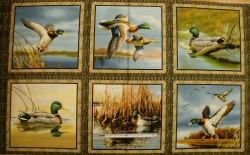 Látky - vzor 602338 Divoké kachny - panel - Panel  60 cm