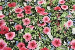 4801-503 Květy ibišků s kolibříky -