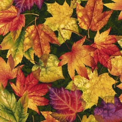 Látky Patchwork - Autumn Album 097